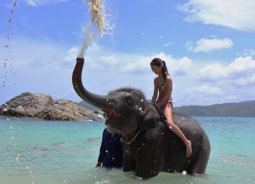 海で象乗り体験料込み!フォトジェニックツアー+オアシススパ